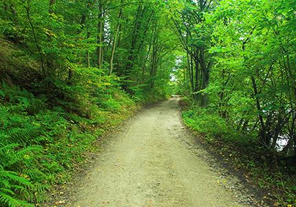 Bruce County rail trail